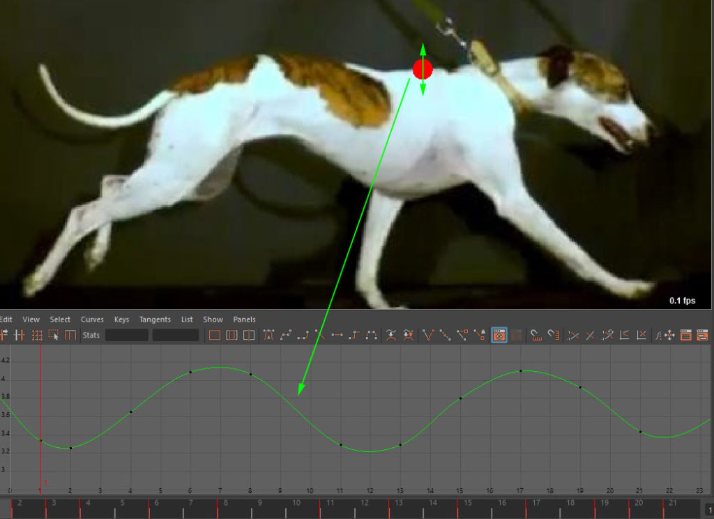 gallop_ycurve_11frames_with-ref