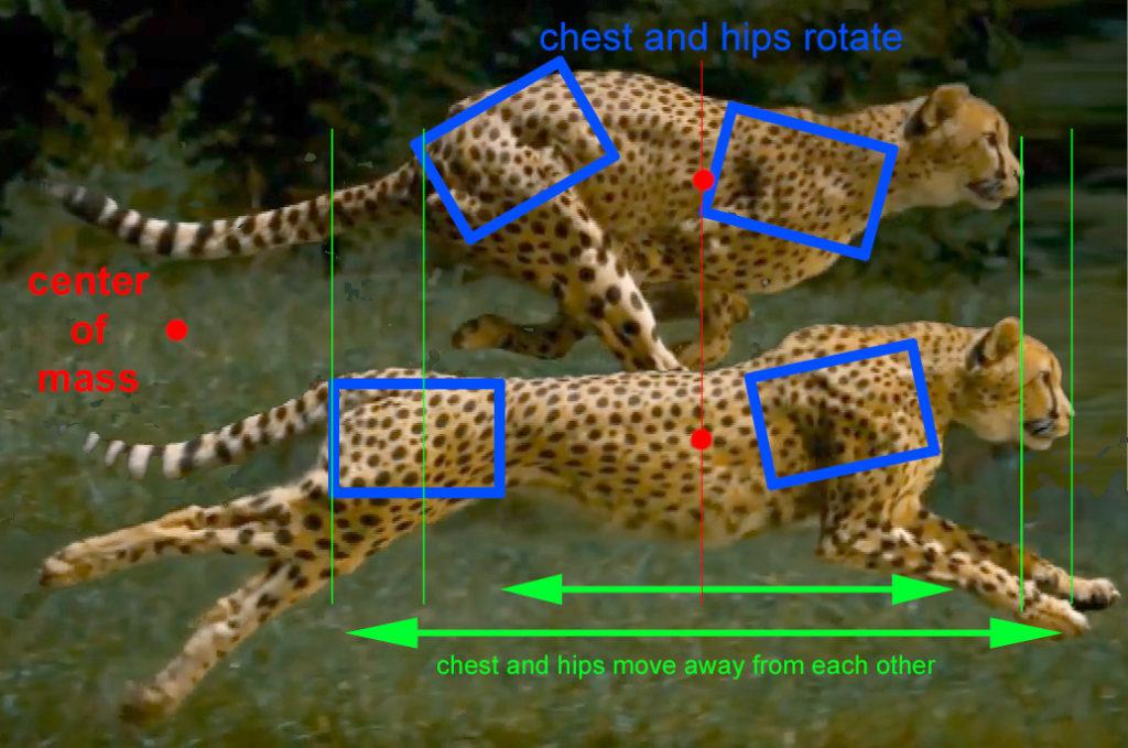 cheetah_com