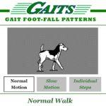 gaits_01